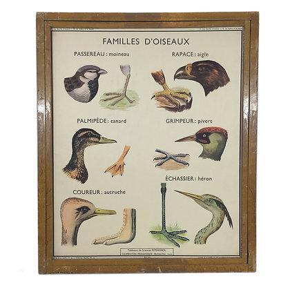 Affiche Les familles d'oiseaux / La vipère et le lézard