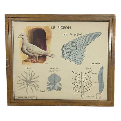 Affiche Le pigeon / La poule