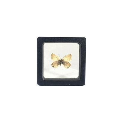 Petit cadre papillon carré