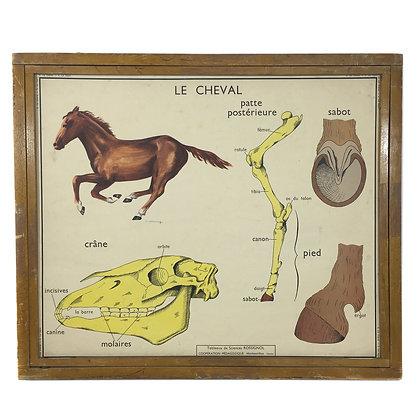 Affiche Le cheval / Le lapin