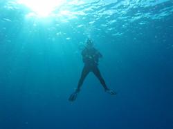 Aloha Hawaii Diving