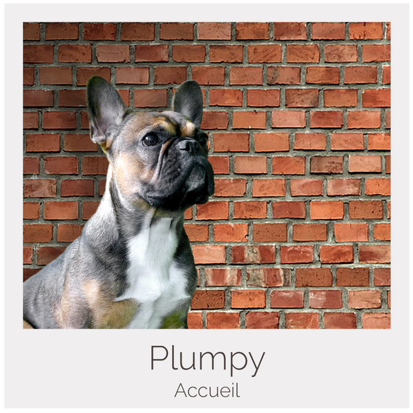 Plumpy.png