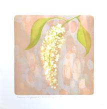 Prunus virginiana (Chokecherry) 2