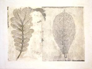 Folio Botanica Plantas Medicinales (Senna y Almendre)