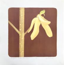 Forsythia (Golden Bells) 1