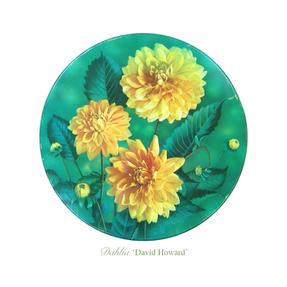 Decorative Dahlia 1965