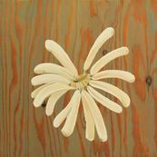 Respire (Sandflower)