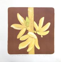 Forsythia (Golden Bells) 2