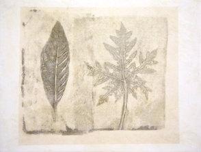 Folio Botanica-Aguacate y Papaya
