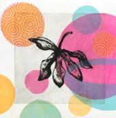 Orchideas 4