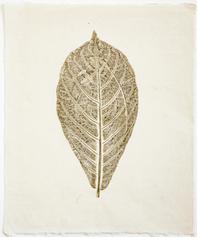 Terminala catappa (Sea Almond)