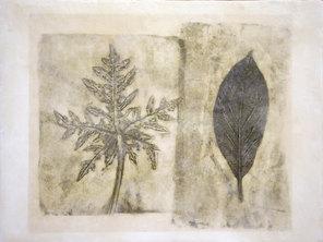 Folio Botanica-Facile de cultiva (Papaya y Aguacate)