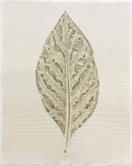 Morinda citrifolia (Noni)