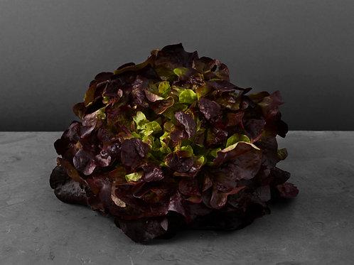 Oakleaf Lettuce - Red