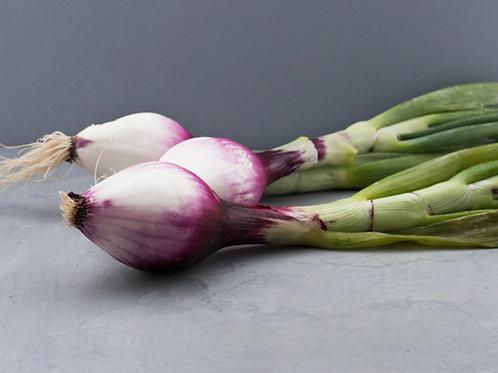 Spring Onions - Tropea - £8.95/kg
