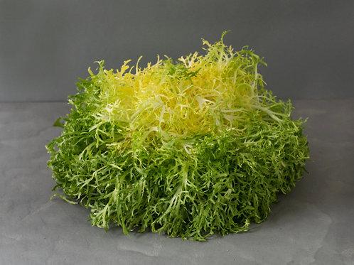 Lettuce - Frisée