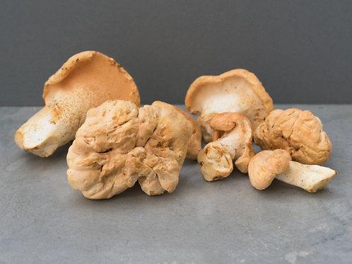 Mushroom - Pied Mouton - £2.17/100g