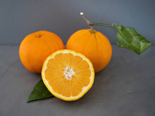 Navelina Oranges - Large