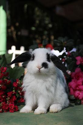 Blog do Heinrich, criador de coelhos