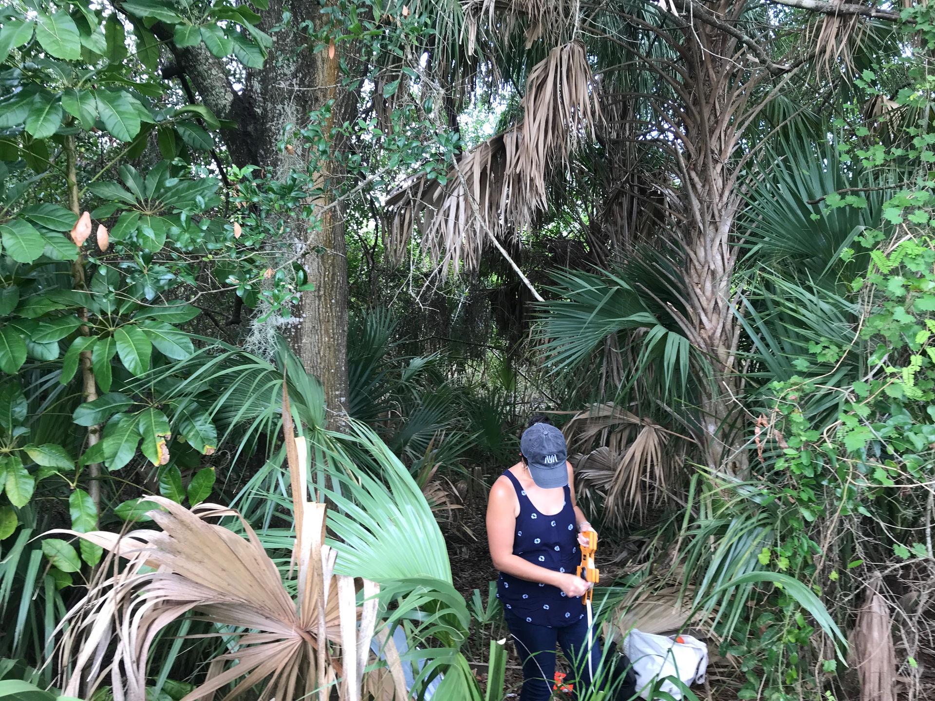 Site analysis of Southwest Florida habitat
