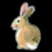 easter brunch bunny_cut.png
