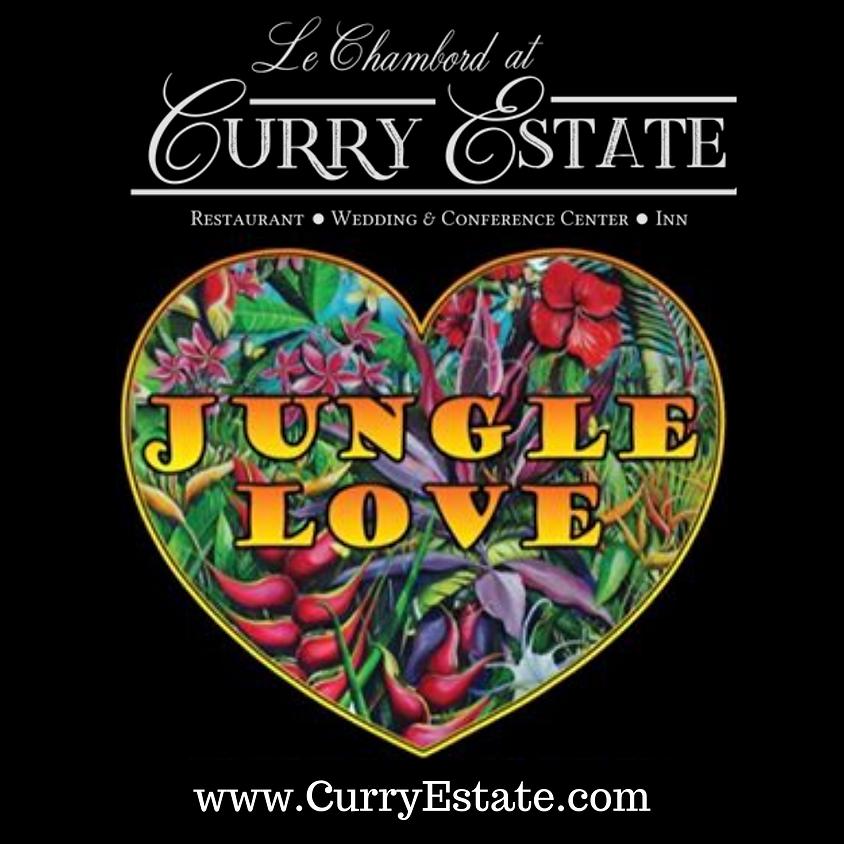 Jungle Love - Live Music