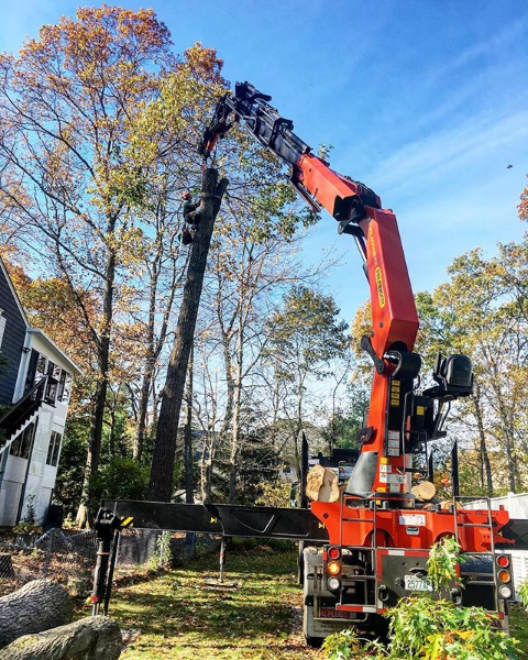 Surgical Tree Removal