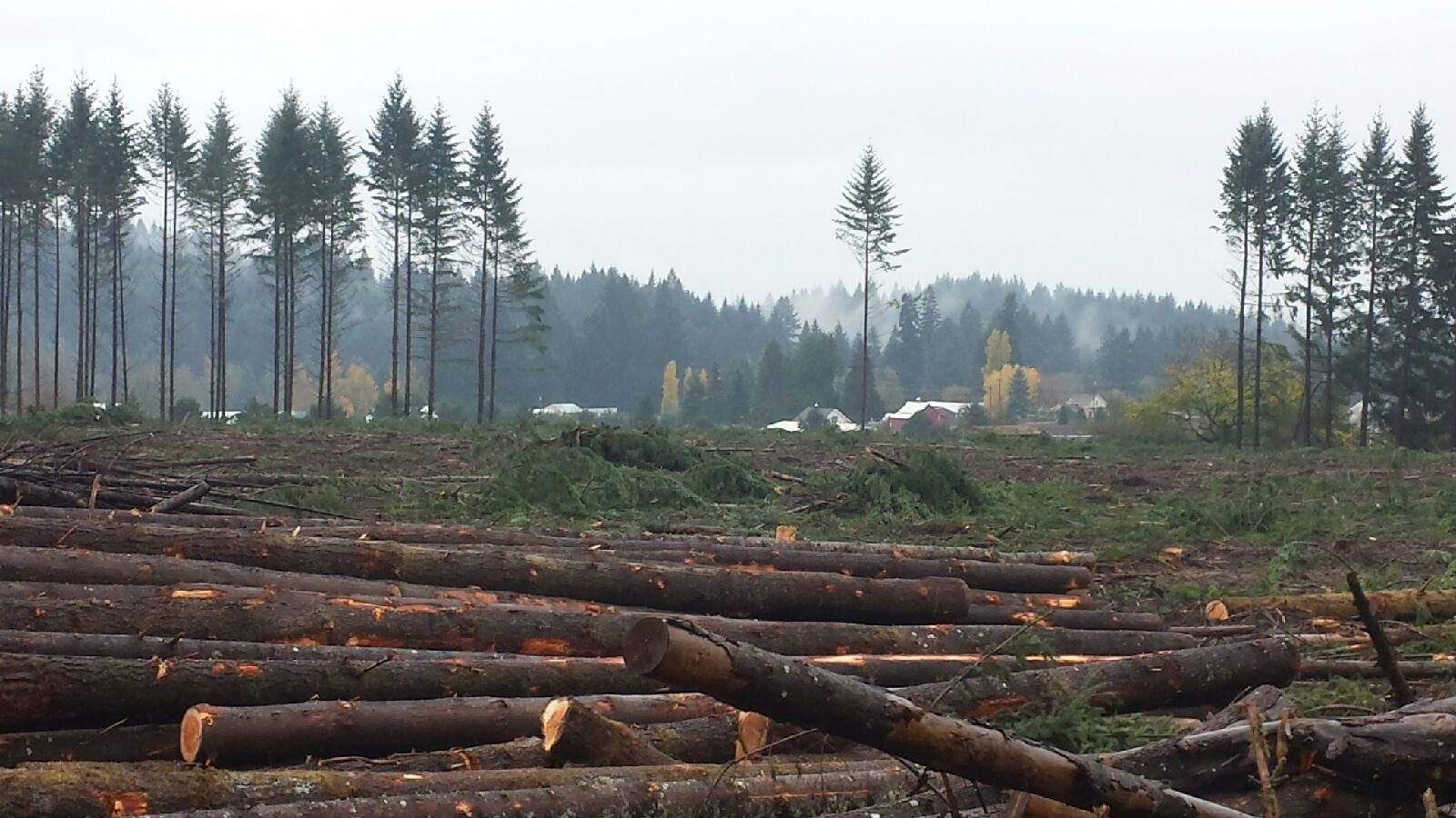 industrial-tree-clearing-equipment-oregon-logs