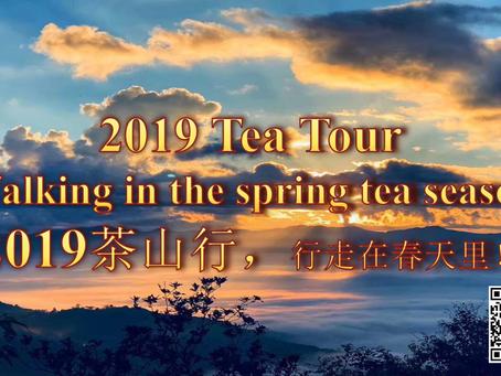 Touring the tea estates of southern Yunnan