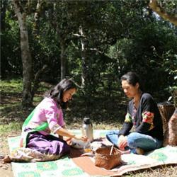DiscoverCha Jingmai Ancient Tea_副本.jpg