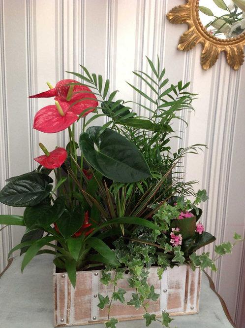 Baúl Variado de Plantas