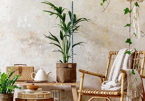 alice-houseplant-c2.jpg