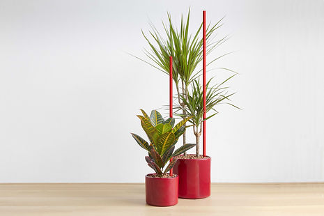 scarlet-houseplant-c2.jpg