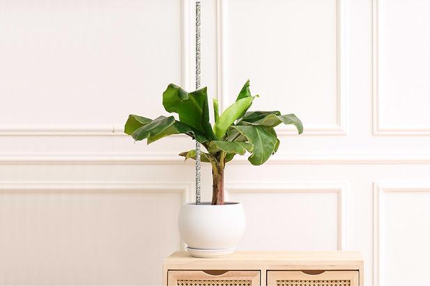 fiore3ft-houseplant-c2.jpg