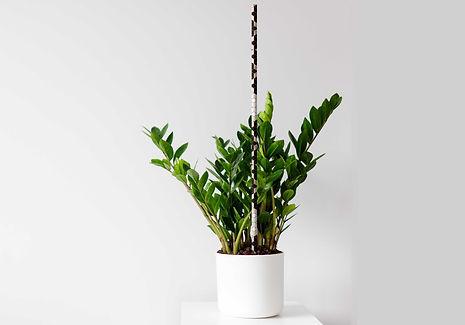 atticus-houseplant-c2.jpg