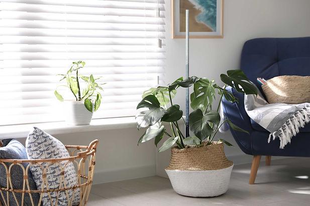 ausra-houseplant-c2.jpg