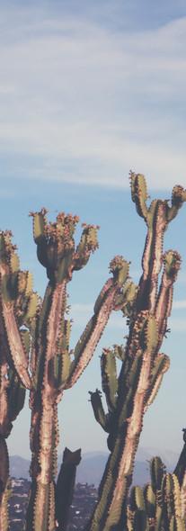Cacti, Los Angeles