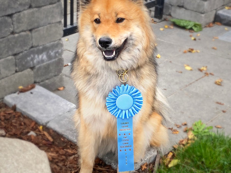 Hildy is a Canine Good Neighbour!