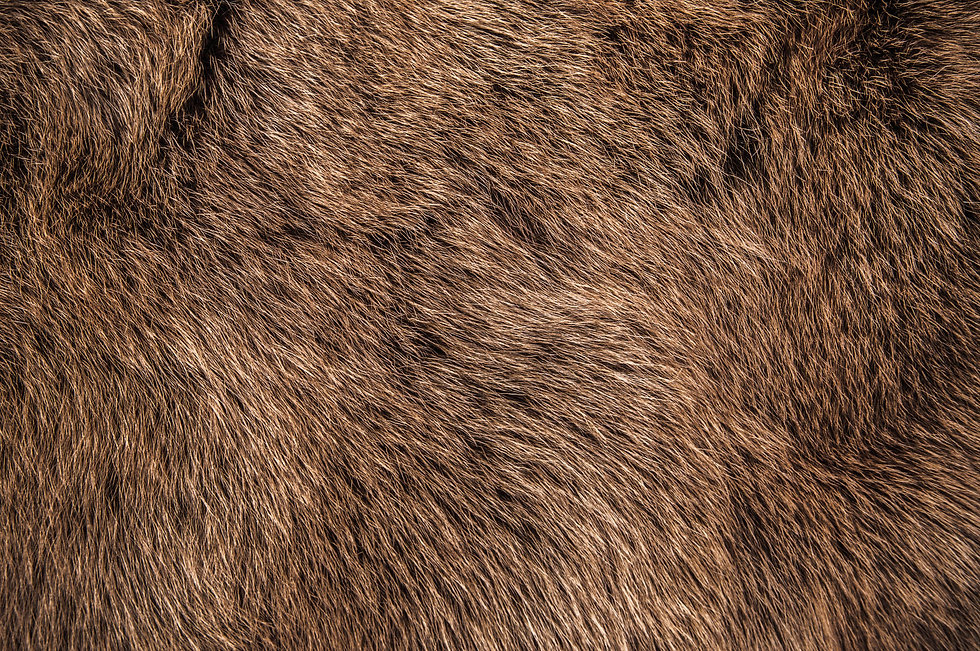 Red Brown Grey Wolf, Fox, Bear Fur Natur