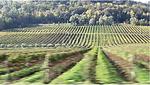I primi risultati del progetto Gleres di Confagricoltura Treviso: viticoltura sostenibile e libera dai fitofarmaci