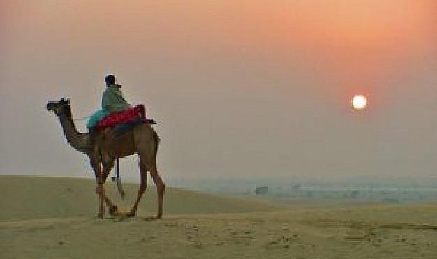 Camels Safari in Jaisalmer