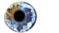 Auge1920 1080.png