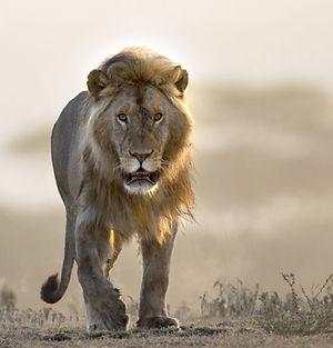 LION-2048x1021 (2).jpg