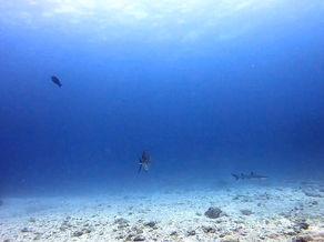 黒島北ツインロック トラフザメ