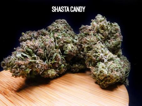 SHASTA CANDY FLOWER - Top Shelf Hemp Co. Product Profile