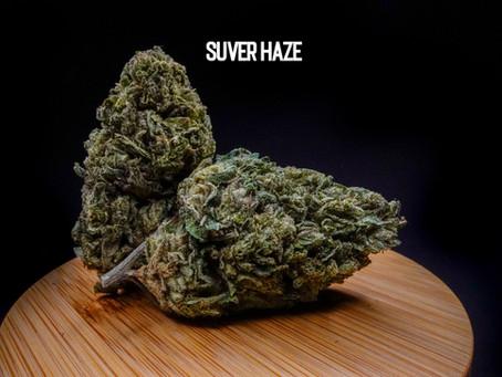 SUVER HAZE FLOWER - Top Shelf Hemp Co. Product Profile