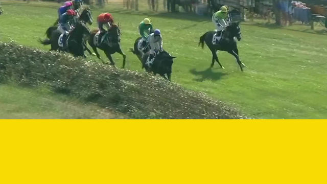 The new look of steeplechase racing ..