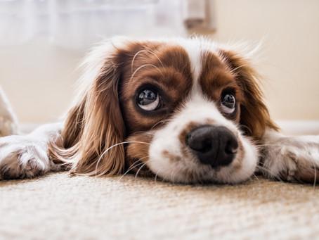 Stres u psů a koček