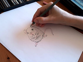 Sketching a mouse