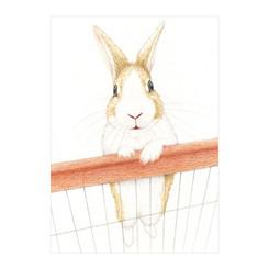 Marley the Rabbit